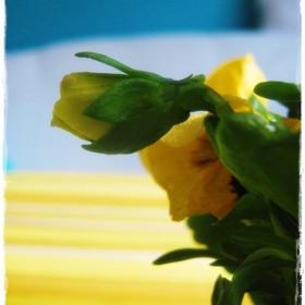 &#x3B;&#x3B; wiosennie się zrobiło i kolorowo...