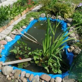 Lato (2011) w moim ogródku