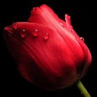 Kolor czerwieni:)