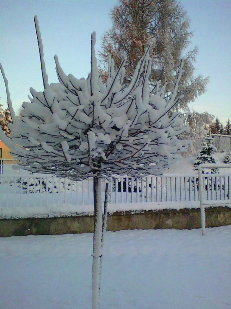 Pozostałe, Zimowe klimaty