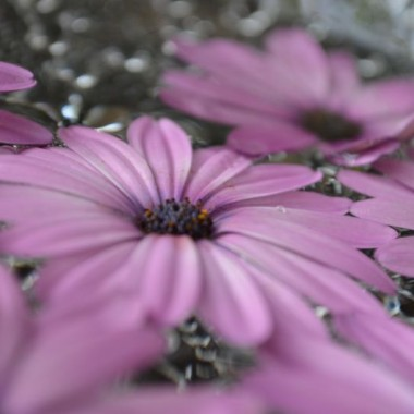 łebki kwiatów pływające w wodzie są ciekawą dekoracją