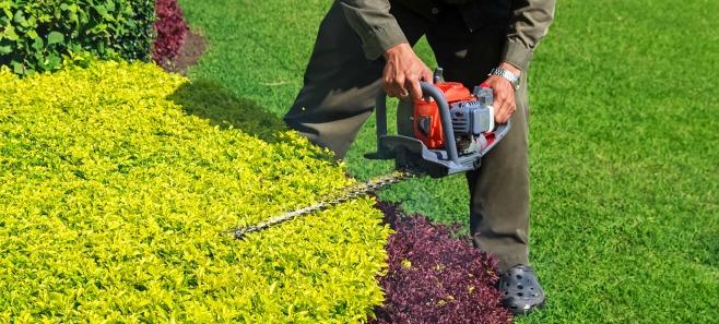 Jak poprawnie przycinać krzewy ozdobne?