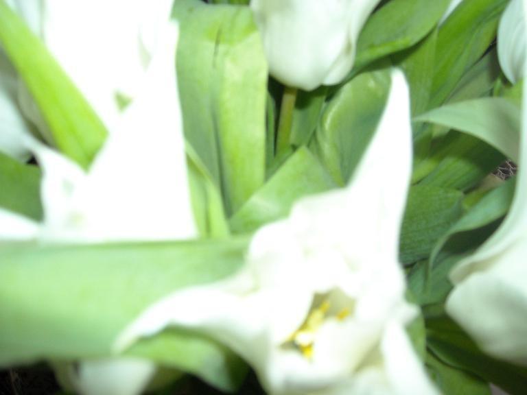 Pozostałe, Wiosenny misz - masz.....................