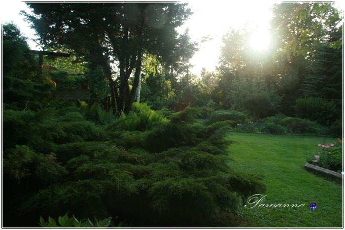 Pozostałe, Ogród o zachodzie słońca - :)
