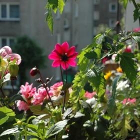 Mały ogród na balkonie :)