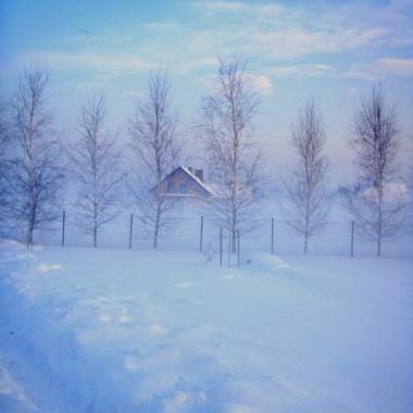 Pstryki w moim zimowym ogrodzie