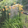 Rośliny, na wiejskim podwórku