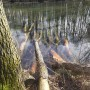Leśne klimaty, Rezerwat Niebieskie Źródła