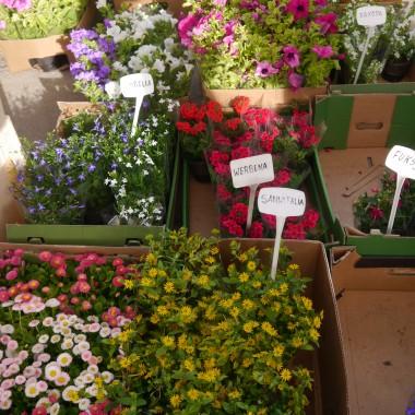 Maj trzeba było zacząć od wizyty na giełdzie kwiatowej