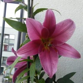 Moj balkon namiastka ogrodu, cz.2