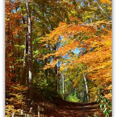 Jesienny spacer i łapanie ostatnich jesiennych kolorów.Zapraszam