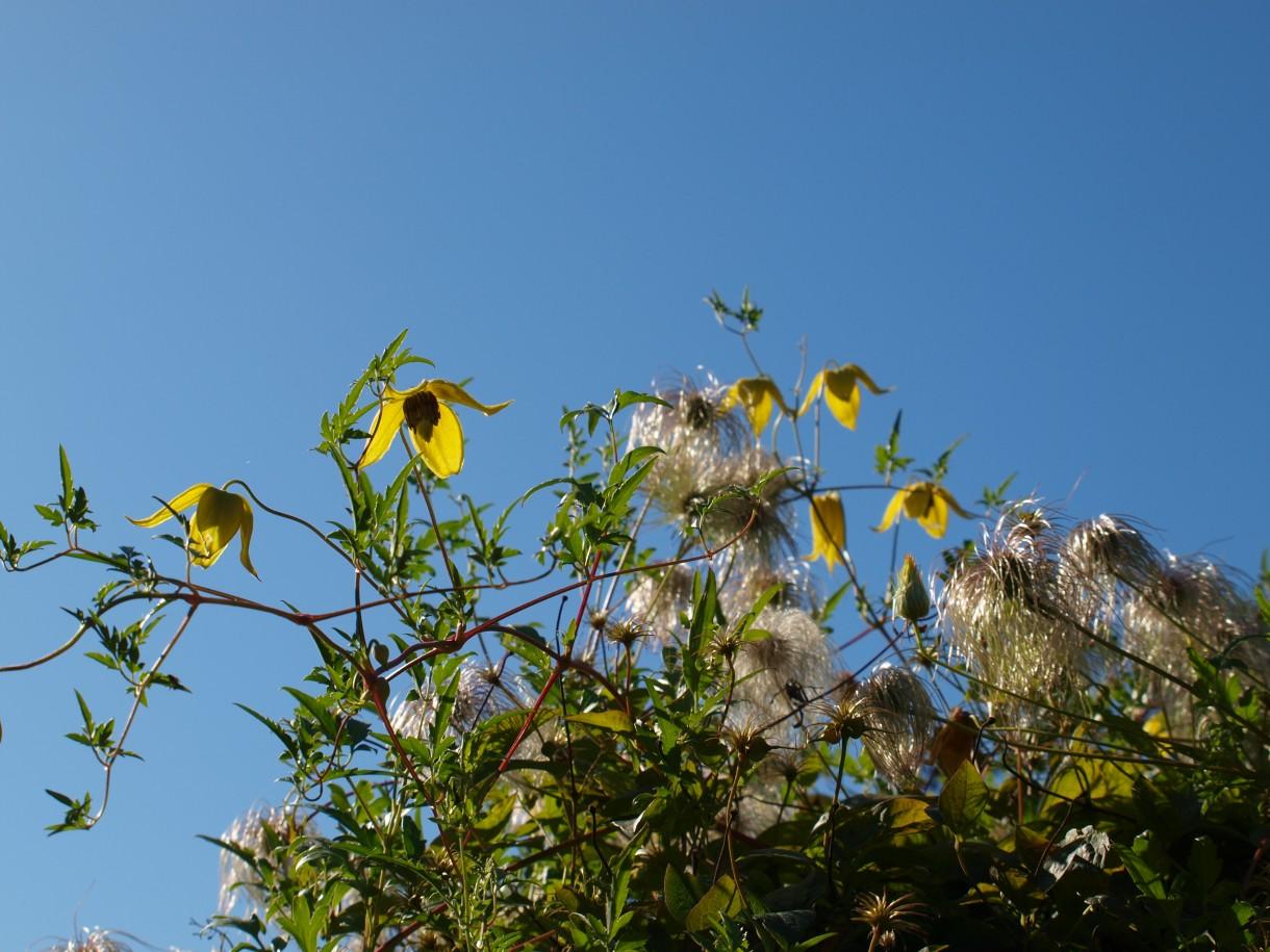 Rośliny, Początek jesieni