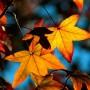 Rośliny, Żółty jesienny liść...