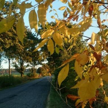 Jesień mieni i czaruje kolorami :)