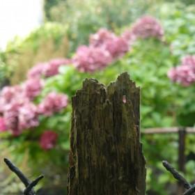 W małym ogrodzie