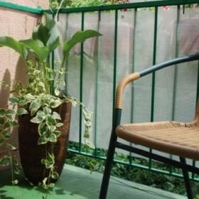 BALKONIK 2009... mój mały ogródek &#x3B;)