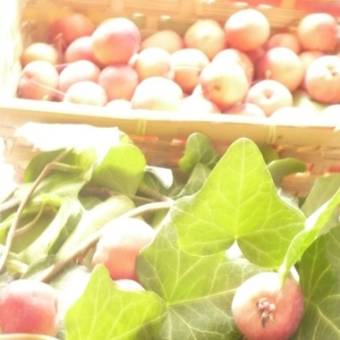 ................i jabłuszka...............