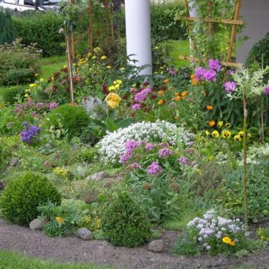 Ogródek zawiera około 50 gatunków roślin bylin wieloletnich kwitnących cały rok począwszy od przebiśniegów, krokusy itp oraz wyhodowane i formowane przeze mnie różne kształty bukszpanów {na razie 3-piętrowe}. Ponadto cyprysiki, miniaturowe tuje, pienne róże, wierzba japońska, tawułka japońska, buk, modrzew itp.