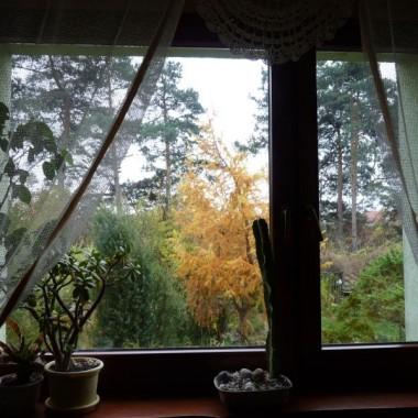 Mój  jesienny  ogród