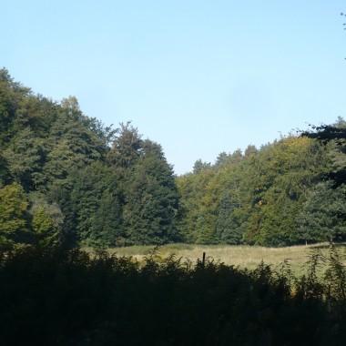 ...................i dolina z zieleni ................
