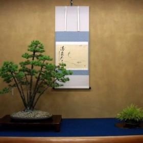 Bonsai w naszych domach