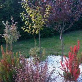 barwy jesieni w moim ogrodzie ....