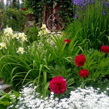Mój mały zakątek ogródkowy