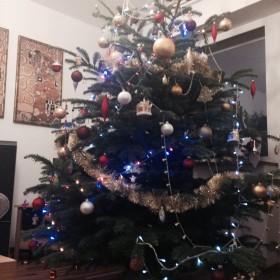 Drzewo pokojowe