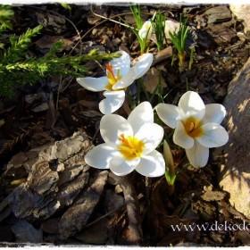 Wiosna, wiosna, wiosna, ach to ty!!!