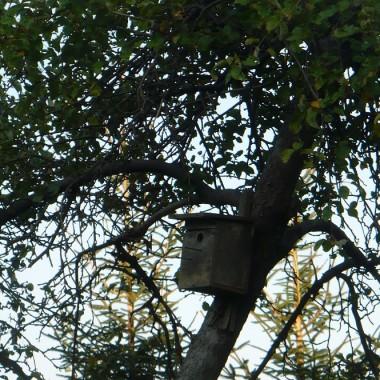 ...............i budka dla ptaszków w sadzie.............