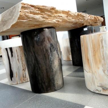 Skamieniałe Drewno Zapraszam