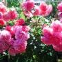 Ogród, kwiaty w ogrodzie