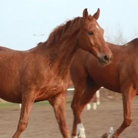 Koń bardzo niegrzeczny koń
