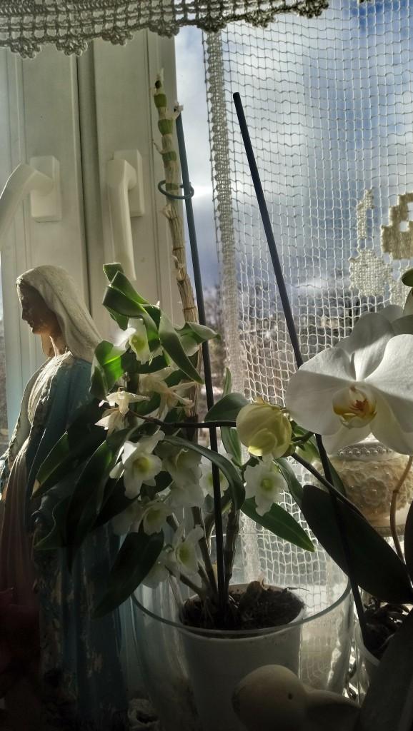 Dekoratorzy, Czekając na wiosnę .................. - ...............i kwitną wszystkie kwiaty w domu..............