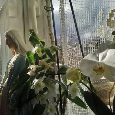 ...............i kwitną wszystkie kwiaty w domu..............
