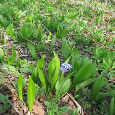 bieszczadzka wiosna