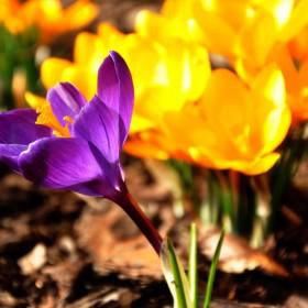Nieśmiało i z wielkim trudem nadciąga ukochana wiosna:)