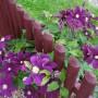 Ogród, W oczekiwaniu na bajkowe kolory