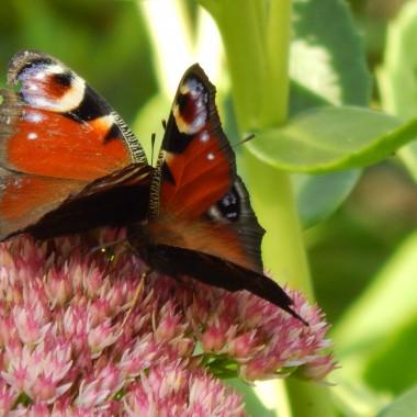 """""""Na skrzydłach wrócą jak motyle barwne dni..."""""""