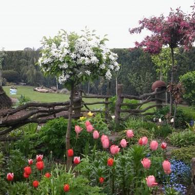 Ogród budzi się do życia...