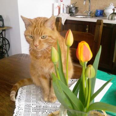 Pan Tulipan -wspominki