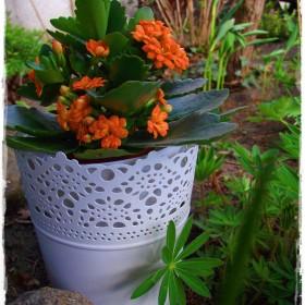 Ogrodowe rozkwitania i pierwsze wiosenne chwile w ogrodzie&#x3B;