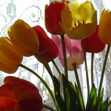 .................i tulipany...............