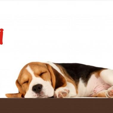 """Przedstawiamy nasz nowy pomysł :)  Kolekcja liter """"PUPILE"""" ,która została stworzona specjalnie dla wielbicieli zwierząt :) To oryginalny i stylowy wystrój kącika pupila (np. legowiska czy miejsca obok  misek).Zapraszamy do składania zamówień :) HOKO GROUP www.KOKObyHOKO.blogspot.com"""