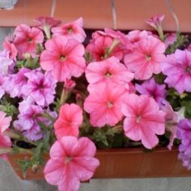 moje roślinki w czasie suszy