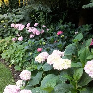 Lato, nie da się ukryć- pachnie, kwitnie i czaruje:))0