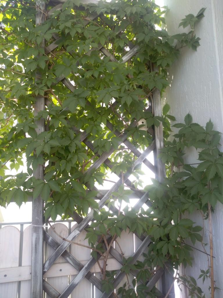 Balkon, mój mały balkonik