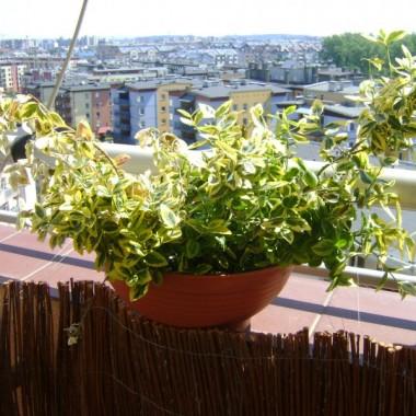 Oceńcie mój balkonik. To mój debiut w tej dziedzinie :)