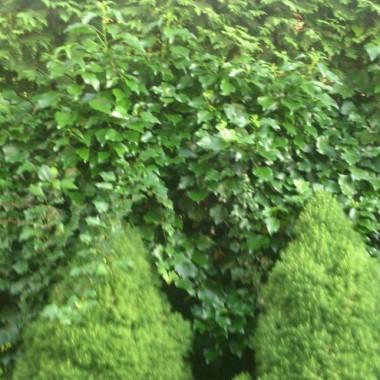 Mój mini ogródko-tarasik:)
