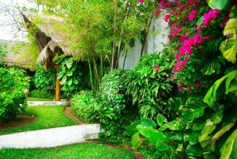 Bambusy w ogrodzie – uprawa i pielęgnacja